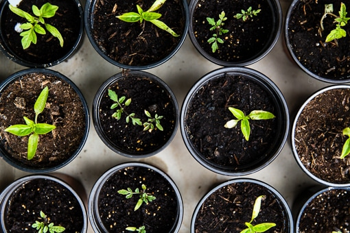 Tips to Starting Your Own Vegetable Garden